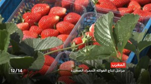 الفواكه والخضر المغربية والانفتاح على السوق الإفريقية